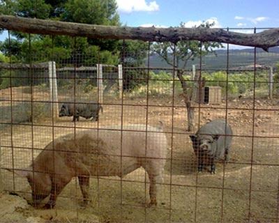 animales-granja-escuela-albacete-10