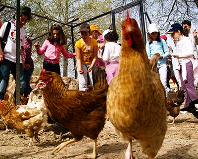 animales-granja-escuela-albacete-8